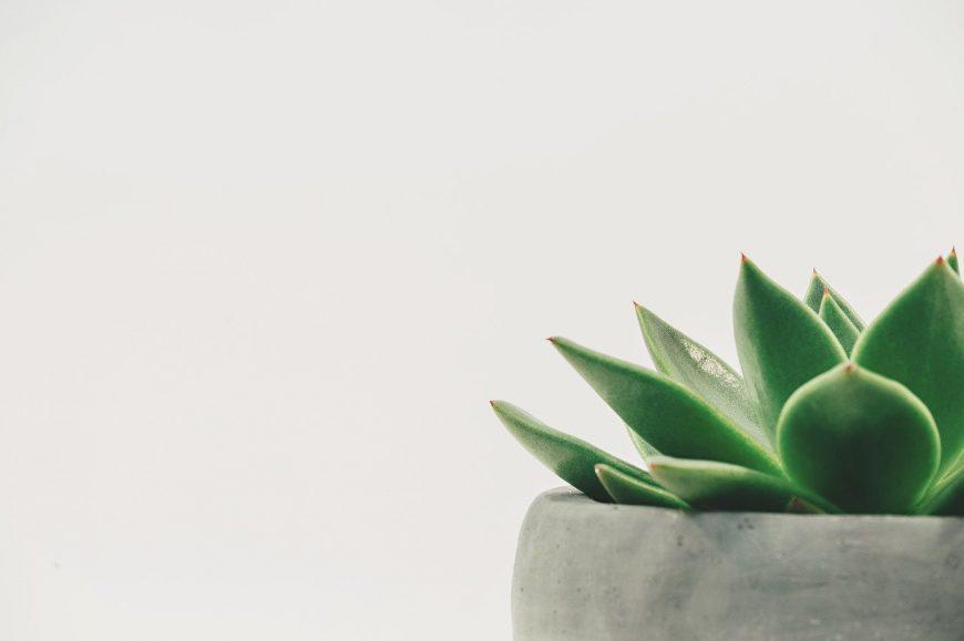 plant-2004483_1280
